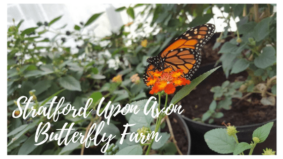 Places To Go: Stratford Upon Avon Butterfly Farm